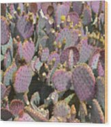 Purple Prickly Pear 3 Wood Print