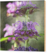 Purple Promises Wood Print