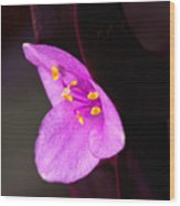 Purple Queen Wood Print