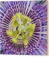 Purple Radial Wood Print