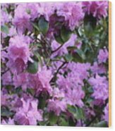 Purple Rhododendrons Wood Print