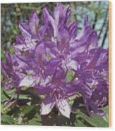 Purple Rhody Wood Print