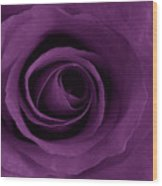 Purple Rose Of Artsy Wood Print