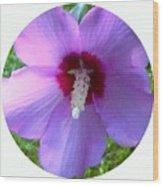 Purple Rose Of Sharon In Circle Frame Wood Print