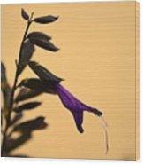 Purple Salvia Wood Print