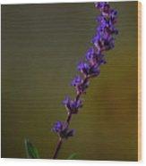 Purple Salvia Flower Wood Print