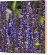 Purple Salvia Sage Wood Print