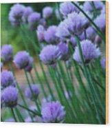 Purple Scallions Wood Print