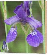 Purple Siberian Iris Wood Print
