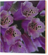 Purple Silk Wood Print