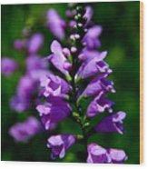 Purple Skullcap Bloom Wood Print