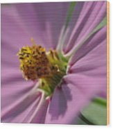 Purple Soft Petals Wood Print