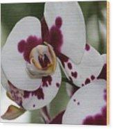 Purple Splash Orchid 3 Wood Print