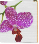 Purple Spotted Orchid On White Wood Print