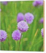 Purple Spring 14 Wood Print