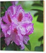 Purple Spring 15 Wood Print