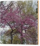 Purple Spring Trees Wood Print