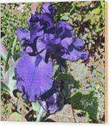Purple Springtime Iris  Wood Print