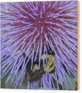 Purple Star Burst Wood Print