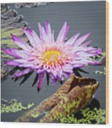 Purple Star Water Lily Wood Print