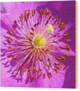 Purple Starburst Wood Print