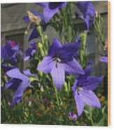 Purple Stars Wood Print