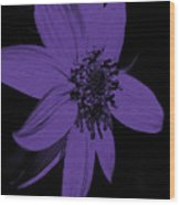 Purple Sunflower Wood Print
