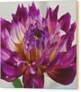 Purple Sunset Flower 1 Wood Print
