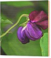 Purple Sweet Pea Wood Print