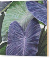 Purple Taro Wood Print