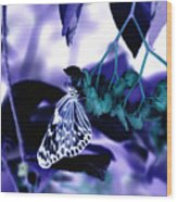 Purple Teal And A White Butterfly Wood Print