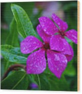 Purple Teardrop Wood Print
