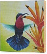 Purple-throated Carib And Bird Of Paradise Wood Print