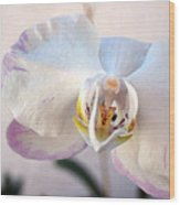 Purple Tipped Orchid Wood Print
