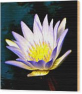Purple Tipped Water Lily Wood Print