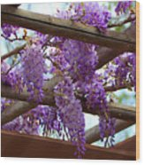 Purple Trellis Wood Print