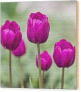 Purple Tulips 1 Wood Print