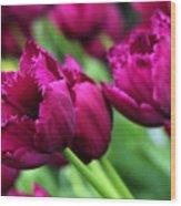 Purple Tulips Wood Print
