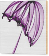 Purple Umbrella Wood Print