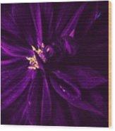 Purple Velvet Wood Print