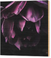 Purple Velvet Rose Wood Print