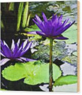 Purple Water Lilies Wood Print