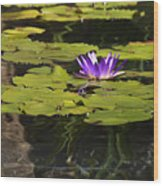 Purple Water Lilly Distortion Wood Print