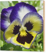 Purple White And Yellow Pansy Wood Print