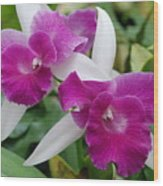 Purple White Orchids Wood Print