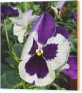 Purple White Pansy Wood Print
