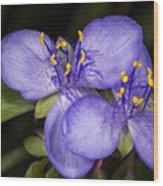 Purple Wild Flower Wood Print