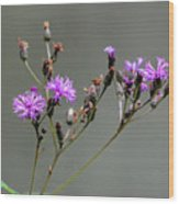 Purple Wildflower In Shiloh National Military Park, Tennessee Wood Print