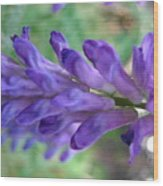 Purple Wildflower Wood Print