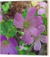 Purple Wildflowers Macro 3 Wood Print